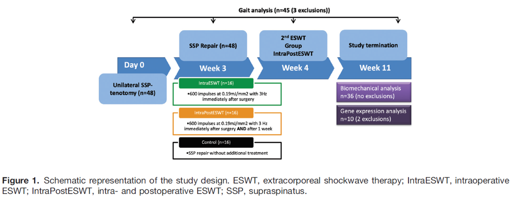 Schematic-representation-eswt